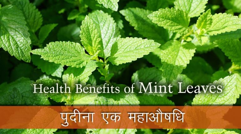 ayurvedatips, ayurveda tips, ayurvedatips-Pepper-mint-benefits-in-hindi